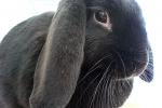 bunny_03